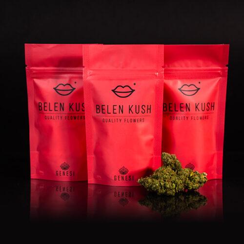 Cannabis Light – Belen Kush – Genesi